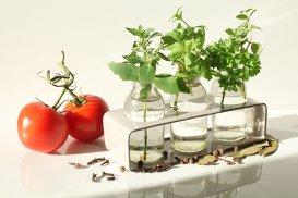 5 plante aromatice pe care le poţi creşte în casă