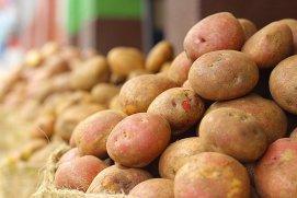 Cartofii, super-alimentul din trecut care revine în topul legumelor minune