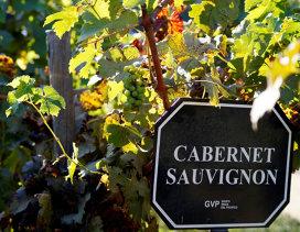 Ce trebuie să ştiţi despre Cabernet Sauvignon – Ghid de bază