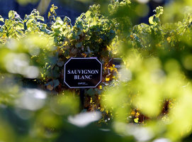 Ce trebuie să ştiţi despre Sauvignon Blanc