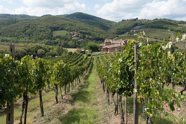 Chianti - Aflaţi totul despre vinul clasic italian