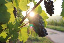Ghidul vinurilor din Lumea Veche vs. Lumea Nouă