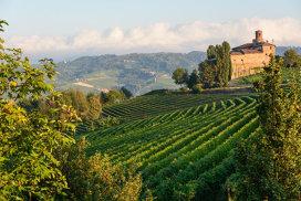 Ghidul vinului roşu Nebbiolo