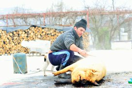 Radu Anton Roman: Porcul cel Sfânt