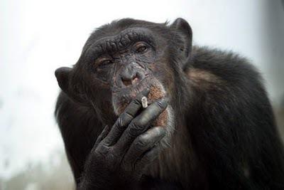 OMC! Cecetătorii a descoperit că oamenii inteligenţi fumează, înjură şi beau mult. Adică io!
