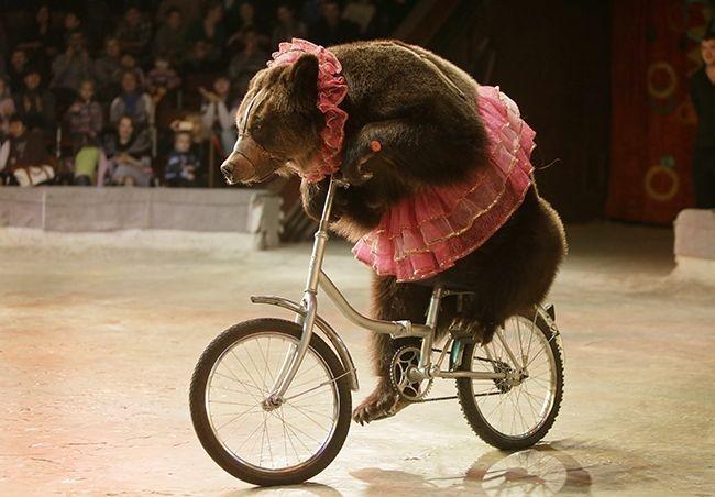 Velicu: Animalele stă mai bine la Circus Globus ca decât în sălbăticie