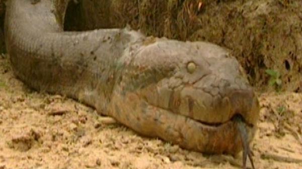Au speriat internetul cu un biet şerpişor prins în captivitate