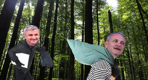 S-a aflat cine comite jafurile de la Sineşti: în pădure are loc Tabăra de vară a PSD!