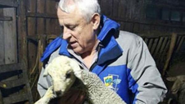 O ursoaică cu doi pui a mâncat un miel din gospodăria unui localnic din Fundata