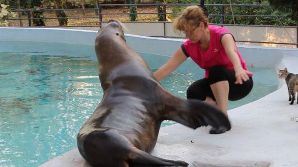 Noi vedete la Delfinariul din Constanţa. Trei lei de mare vor face spectacol