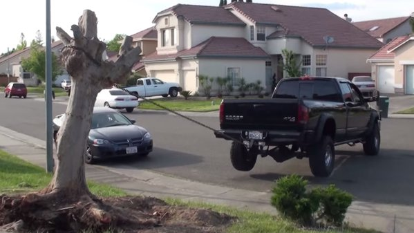 SUA ne învaţă: cum să scoţi un copac din ţâţâni cu un pick-up