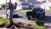 Aşa arată un Moromete de America. Sau cum să dezbini un copac cu camioneta