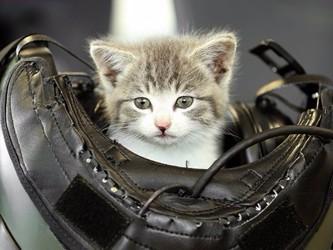 Pisicile au nouă BMWieţi. Iar asta mică a întrecut bine măsura.