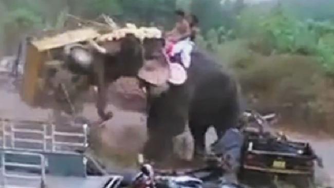 un-elefant-se-