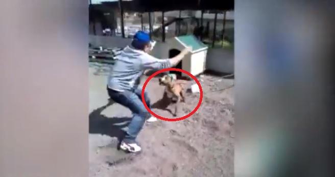 A încercat să provoace un PITBULL, dar s-a rupt lanţul. Momentul a fost filmat şi a ajuns viral pe Internet