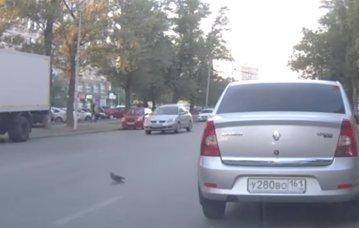 VIDEO Accident cu 3 maşini, din cauza unui porumbel