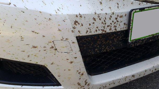Cum să ştergi insectele moarte de pe botul masinii