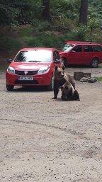 """Cea mai nouă """"tehincă"""" de spargere a maşinilor, aplicată într-o parcare din ROMÂNA - FOTO"""
