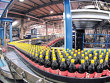Coca-Cola HBC Invests EUR11M in Mineral Water Production Line in Suceava