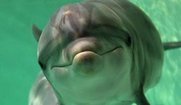 "Delfinii sunt ""persoane non-umane"", susțin experții"