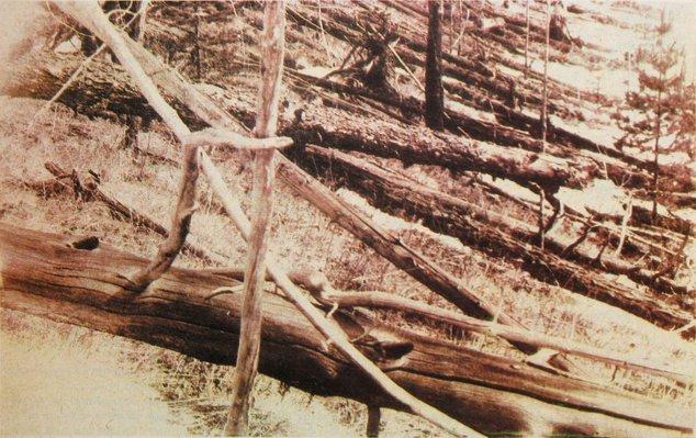 Copaci distruşi de explozie
