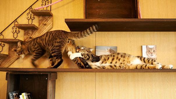 Imagini amuzante care demonstrează că pisicile sunt cele mai teatrale animale de casă - GALERIE FOTO