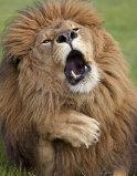 Cele mai amuzante animale surprinse în imagini de fotografi profesionişti - GALERIE FOTO