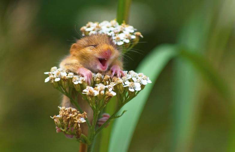 cele-mai-amuzante-animale-surprinse-