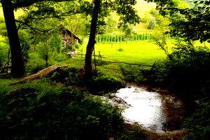 Cum arată satul-fantomă al Banatului. Unde au dispărut toţi locuitorii