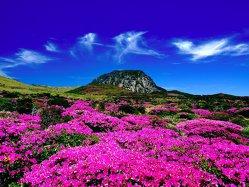 Cea mai populară rută aeriană este între Seul şi o insulă de care probabil nu ai auzit niciodată. Un avion pleacă la fiecare 15 minute