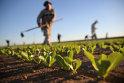 UniCredit Bank intensifică finanţările destinate beneficiarilor de subvenţii APIA