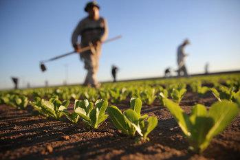 APIA a început plata în avans a subvenţiilor agricole