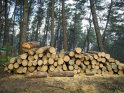 """Cine este """"baronul pădurilor"""" din România. El controlează firma fondată de familia sa în urmă cu 400 de ani şi are o avere de peste 1,15 mld. euro"""
