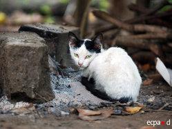Povestea pisicilor războinice: ce rol au jucat felinele în timpul războaielor - GALERIE FOTO