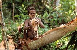 Imagini uluitoare cu tribul care trăieşte în case construite în copaci. Au aflat de restul lumii în anii '70 - GALERIE FOTO