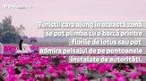 Marea de lotus roşu: un paradis născut din mlaştină - VIDEO