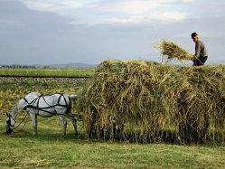 Cat de mult conteaza efectele unui an agricol bun asupra economiei