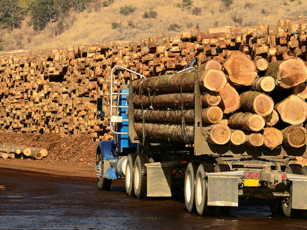 """""""Regele lemnului"""" scoate din România peste un milion de metri cubi pe an"""