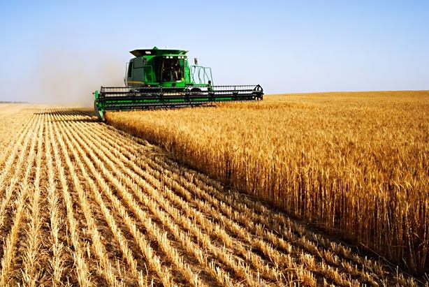 Cele mai mari recolte din ultimul deceniu: România este pe locul cinci în UE la cereale şi pe podium la rapiţă, floarea-soarelui şi soia