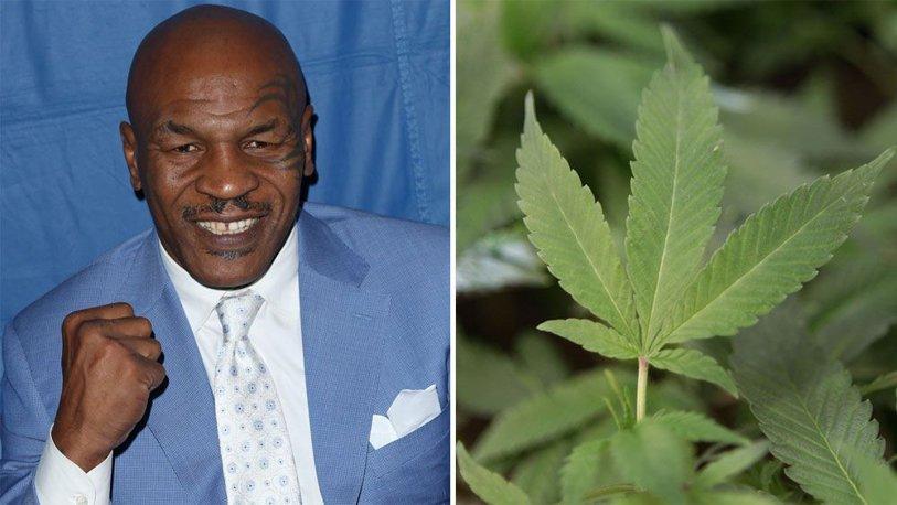 Mike Tyson face afaceri cu marijuana: şi-a deschis o fermă de cultivare în California