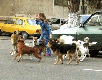 Vă întrebaţi unde au DISPĂRUT câinii vagabonzi? Un grup de englezi, în stare de şoc după o vizită în România! Ce au păţit