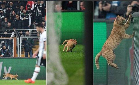 """VIDEO   N-a mai îndurat umilinţa şi a întrerupt meciul :). """"Intrusul"""" care a pătruns pe teren în timpul meciului Beşiktaş - Bayern"""