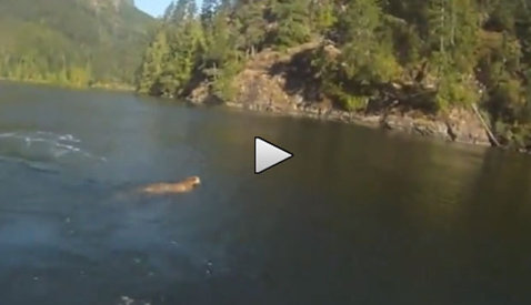 Nu vezi asta nici pe Discovery! VIDEO Un pescar a făcut filmarea vieţii sale: ce a surprins în apă