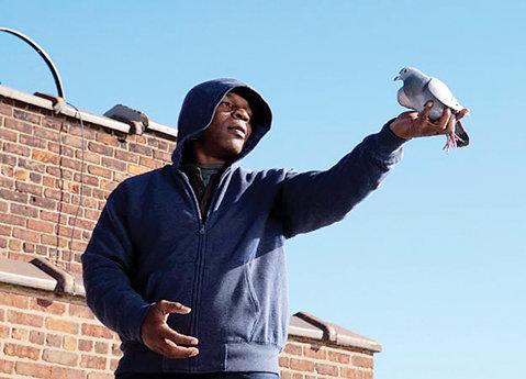 Şi-a găsit liniştea! Mike Tyson, reality‑show cu porumbei pe Animal Planet