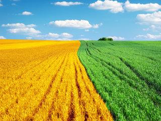 Agricultura va aduce 12 miliarde de euro în PIB, salvând economia în acest an