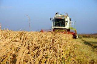 INS confirmă estimarea privind creşterea PIB de 0,2% la nouă luni; agricultura a scăzut cu 20,4%