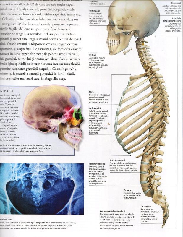 Medicamente in tratamentul herniei intervertebrale a coloanei vertebrale lombare