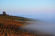 Revoluţia din pahar: Cum se obţin vinurile portocalii sau albastre, moda care schimbă tot ce ştim despre licoarea lui Bacchus