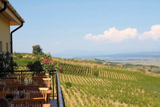 Drumul vinului în România abia începe să se construiască. Cramele îşi deschid porţile, iar turiştii români şi străini se lasă cuceriţi de dealurile Drăgăşaniului sau de cele din podgoria Dealu Mare