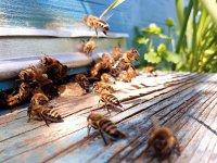Atenţie la glicemie! Cu ce a ajuns să fie combinată mierea şi ce tipuri preferă românii